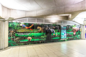 Westminster Jungle large format vinyl wall graphics